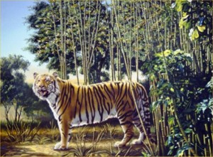 Can you find the hidden tiger in this image?